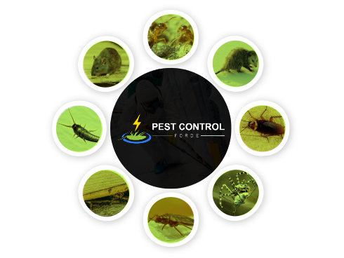 Pest Control Forde