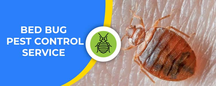 Bed Bug Control Forde